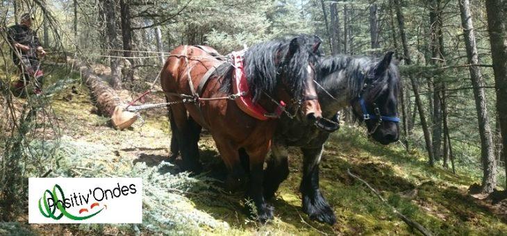 POSITIV'ONDES – LA TRACTION ANIMALE